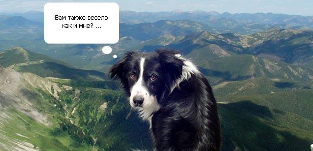 Смешной пес – альпинист