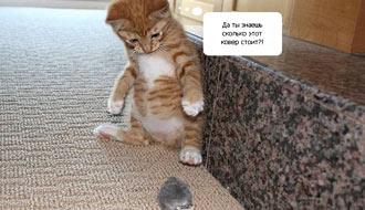прикольные картинки котёнок