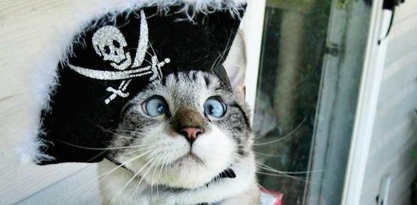 Смешной косоглазый кот