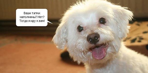 Белый песик-оптимист
