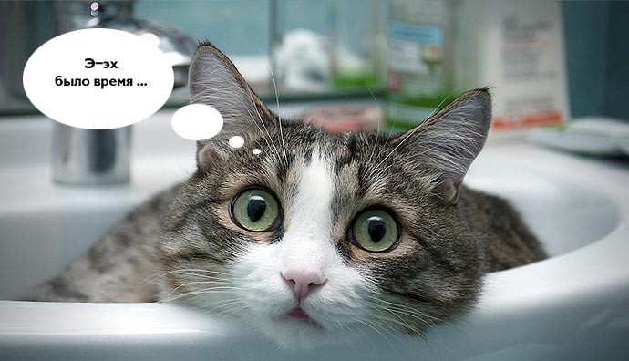 Смешной мечтательный кот