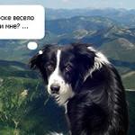 Смешной пес — альпинист
