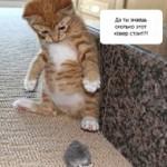 Прикольный котенок и странная мышь