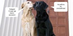 2 собаки: смешной диалог