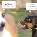 Собачка недотрога